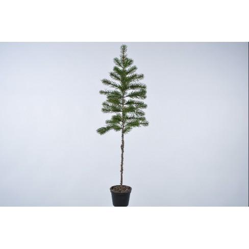 Изкуствена елха в саксия 88см зелена